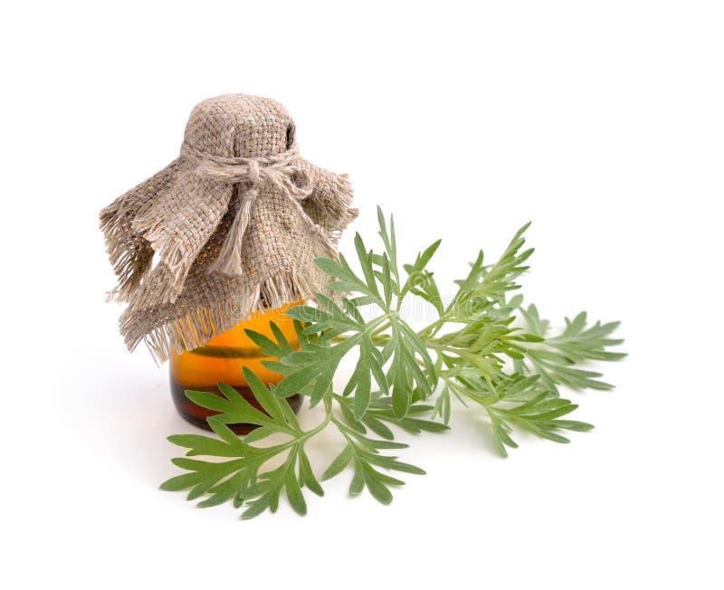 Artemisiaabsinthium med den farmaceutiska flaskan arkivfoton