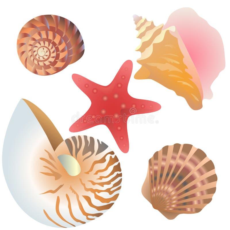 Arten dekorativer Muscheln und Muscheln und Seestern lizenzfreie abbildung