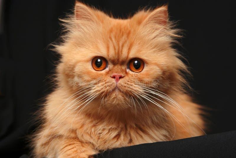Artful cat royalty free stock photos