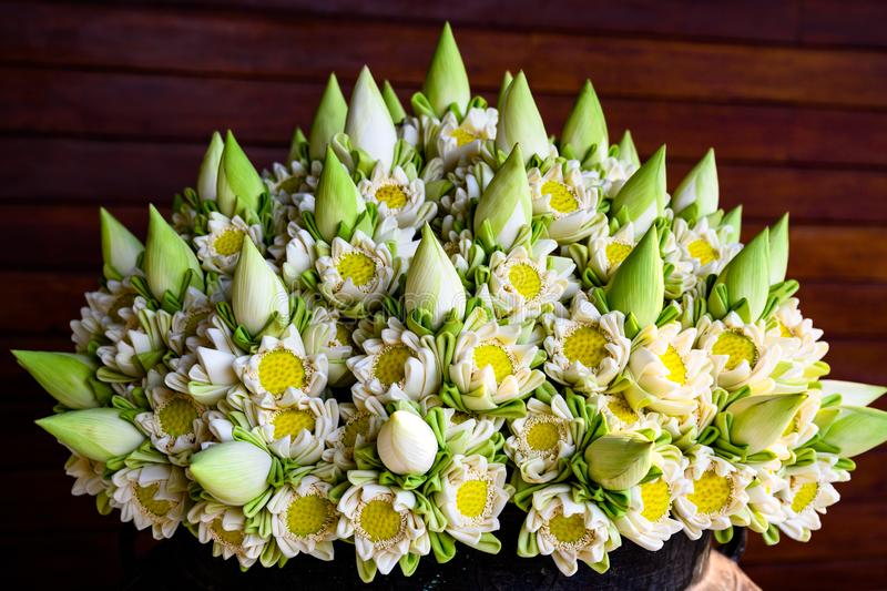 Beautiful lotus flowers in arrangement. Lots of folded white blooming lotus flowers and buds in vase. stock images