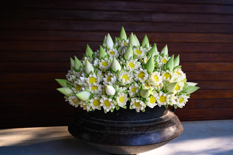 Lotus Flowers in Arrangement. Lots of folded white blooming lotus flowers and buds in vase. royalty free stock image