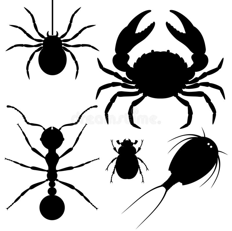 arthropods vektor illustrationer