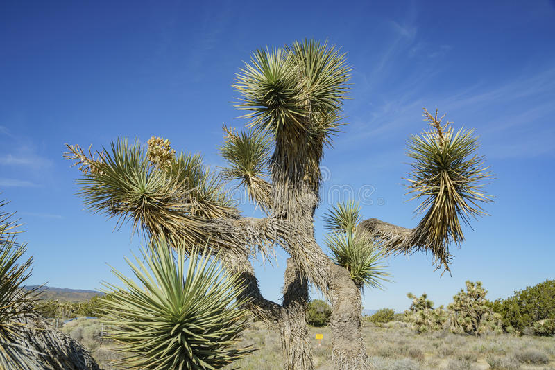 Arthur B Ripley Desert Woodland State Park photos libres de droits