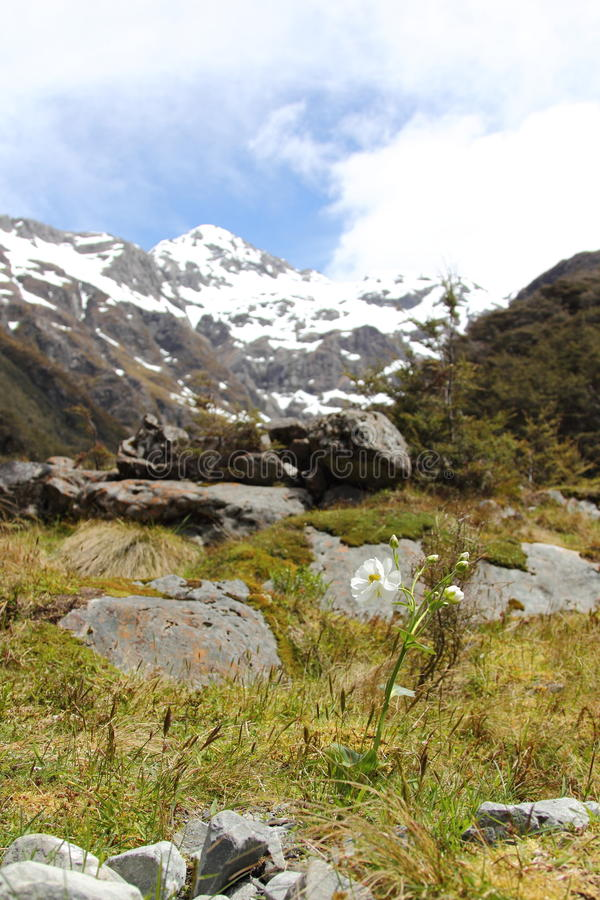 Download Arthur's Pass Royalty Free Stock Image - Image: 22094546