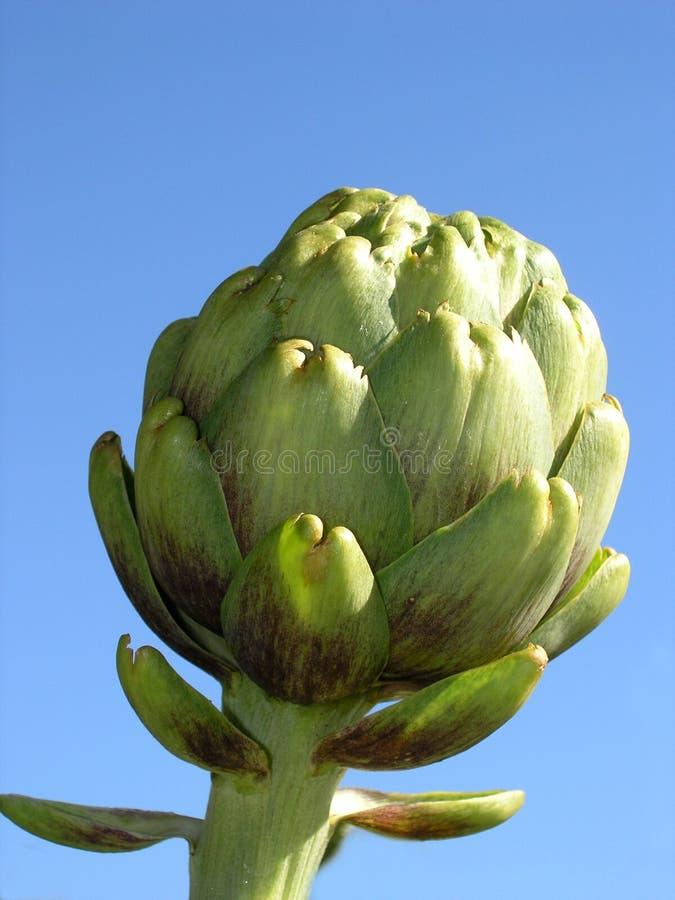 Download Artichoke stock image. Image of garden, healthy, ingredients - 36833