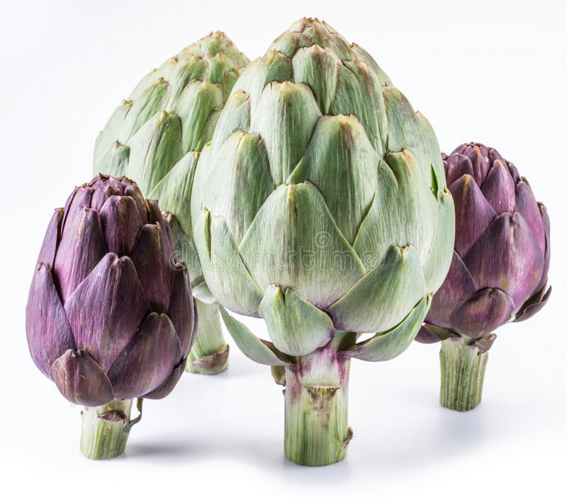 Artichoke flower, purple edible bud isolated on white background royalty free stock photos