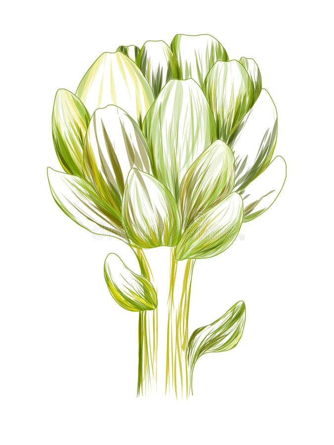 Artichoke green flower head isolated on white background. Fresh eco-friendly product.Organic healthy food. Vector vegetable. vector illustration