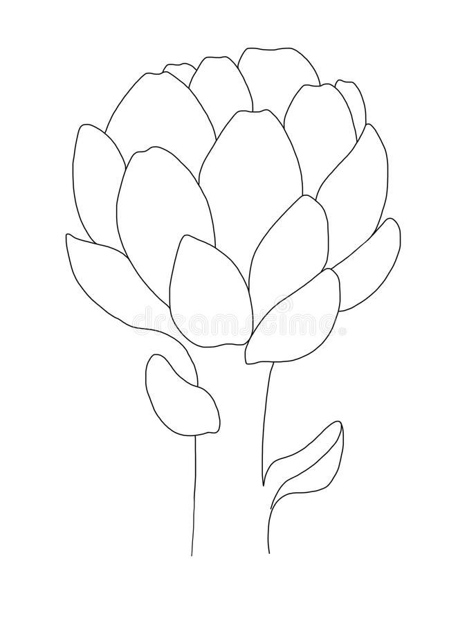 Artichoke print. Black lined Icon on white background. Healthy organic food. Line art design, outline illustration.Isolated object vector illustration