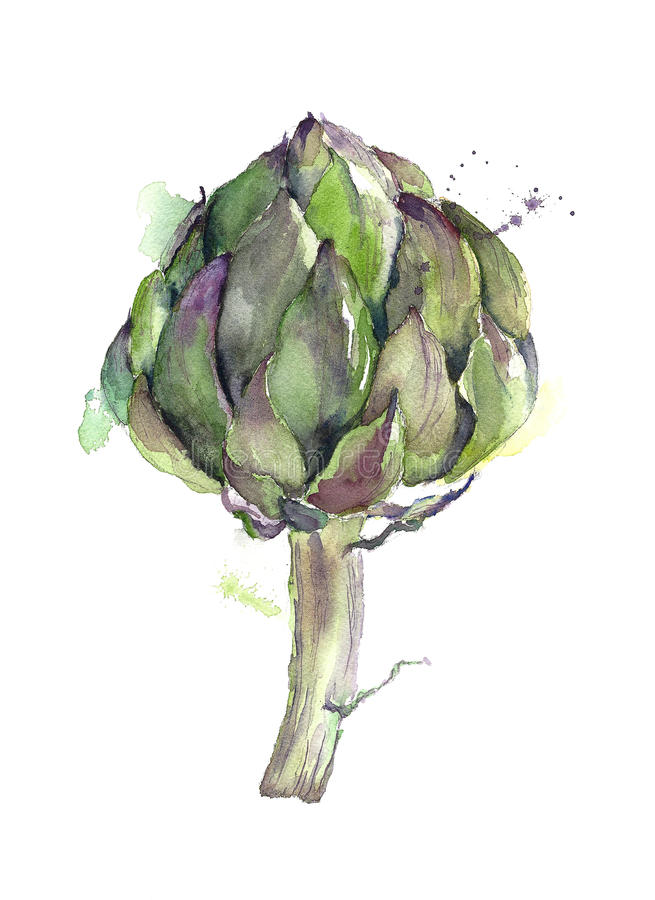 Artichoke vegetable watercolor painting isolated on white background vector illustration