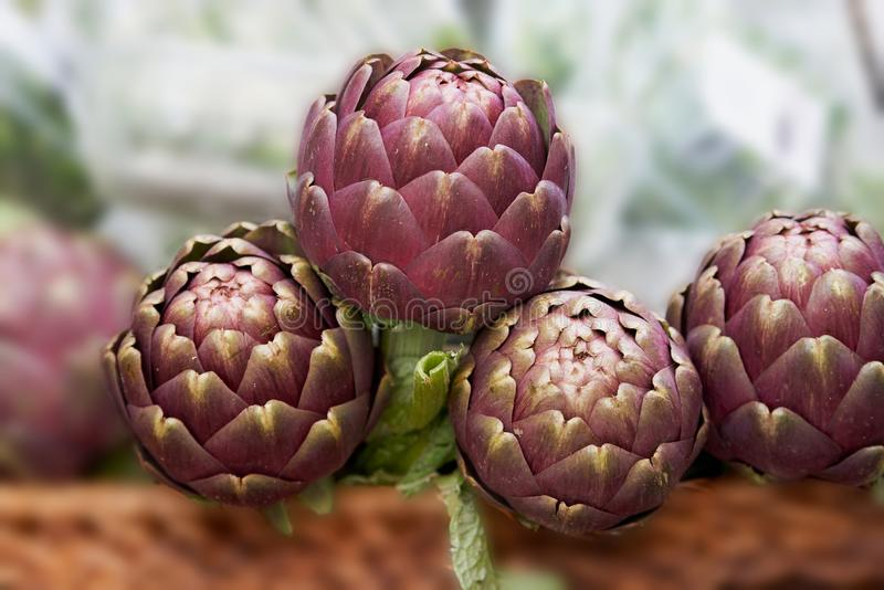 Artichokes Cynara scolymus placed on a market stall royalty free stock photo