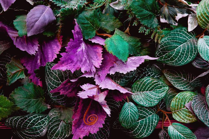 Artificial abstract green and purple tropical leaves. Texture, background stock images