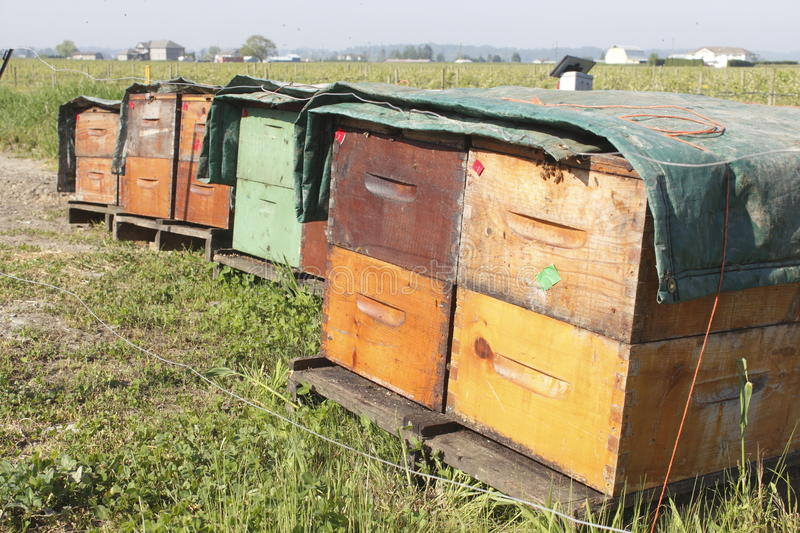 Download Artificial Beehives stock photo. Image of agriculture - 30961006