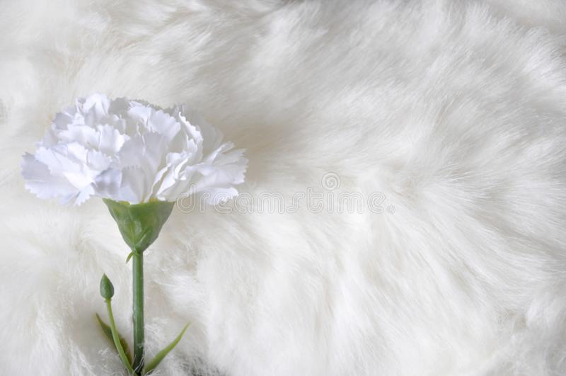 Artificial Carnation on White Wool Background stock photos