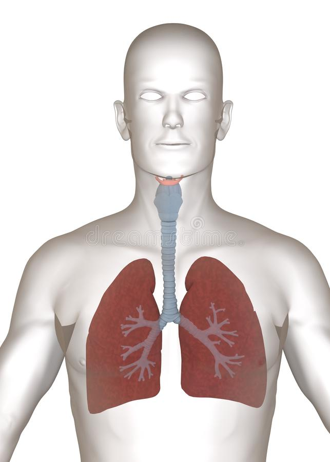 Artificial character with lungs - close