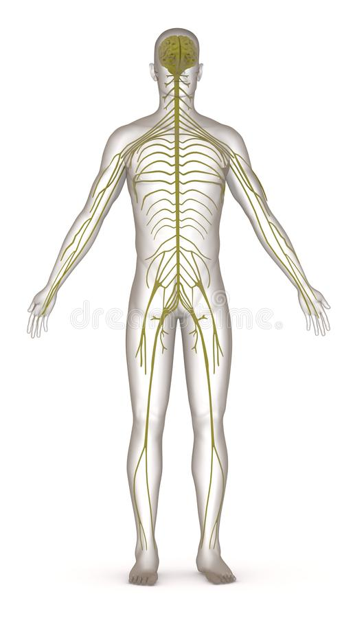 Artificial character with nervous system royalty free illustration
