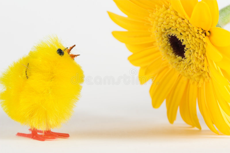 Artificial chicken and yellow gerbera stock image