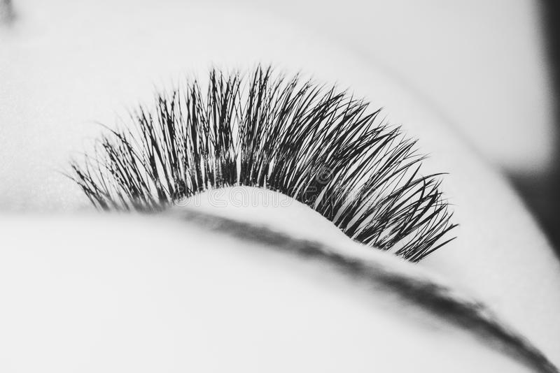 Artificial eyelash extension royalty free stock photo