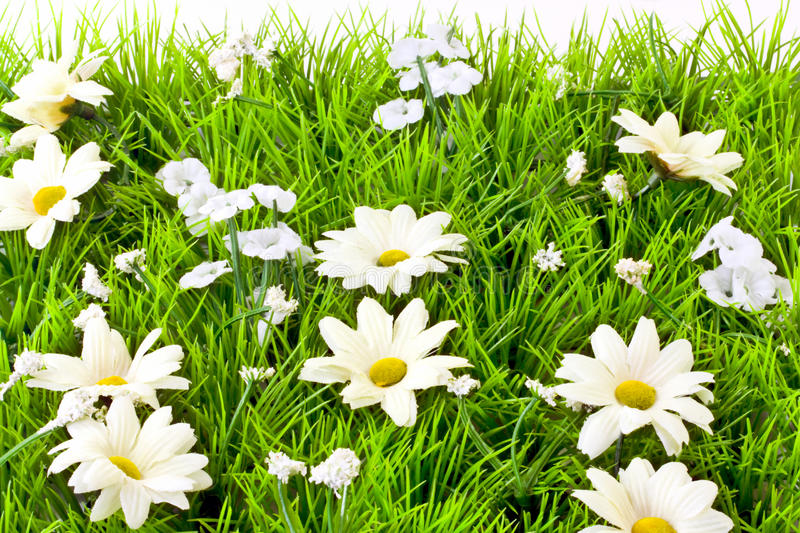 Download Artificial Grass And Daisies Stock Image - Image of nature, green: 19631385