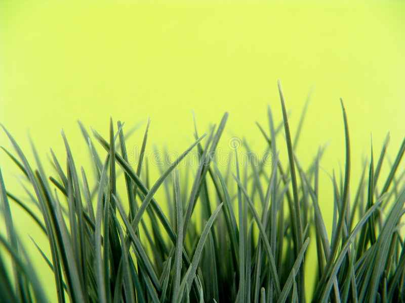 Download Artificial grass stock photo. Image of background, turf - 4699994