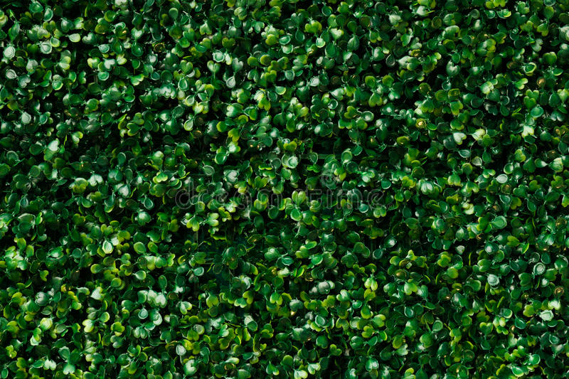 Artificial green grass - green leaves background texture. stock image