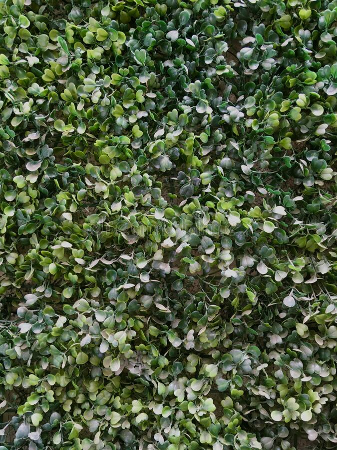 Artificial green wall royalty free stock image