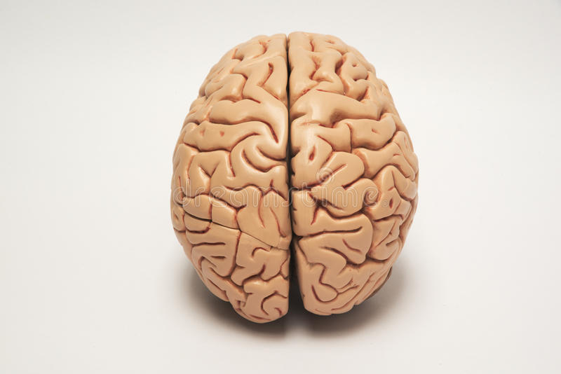 Artificial human brain model. Top view royalty free stock photo