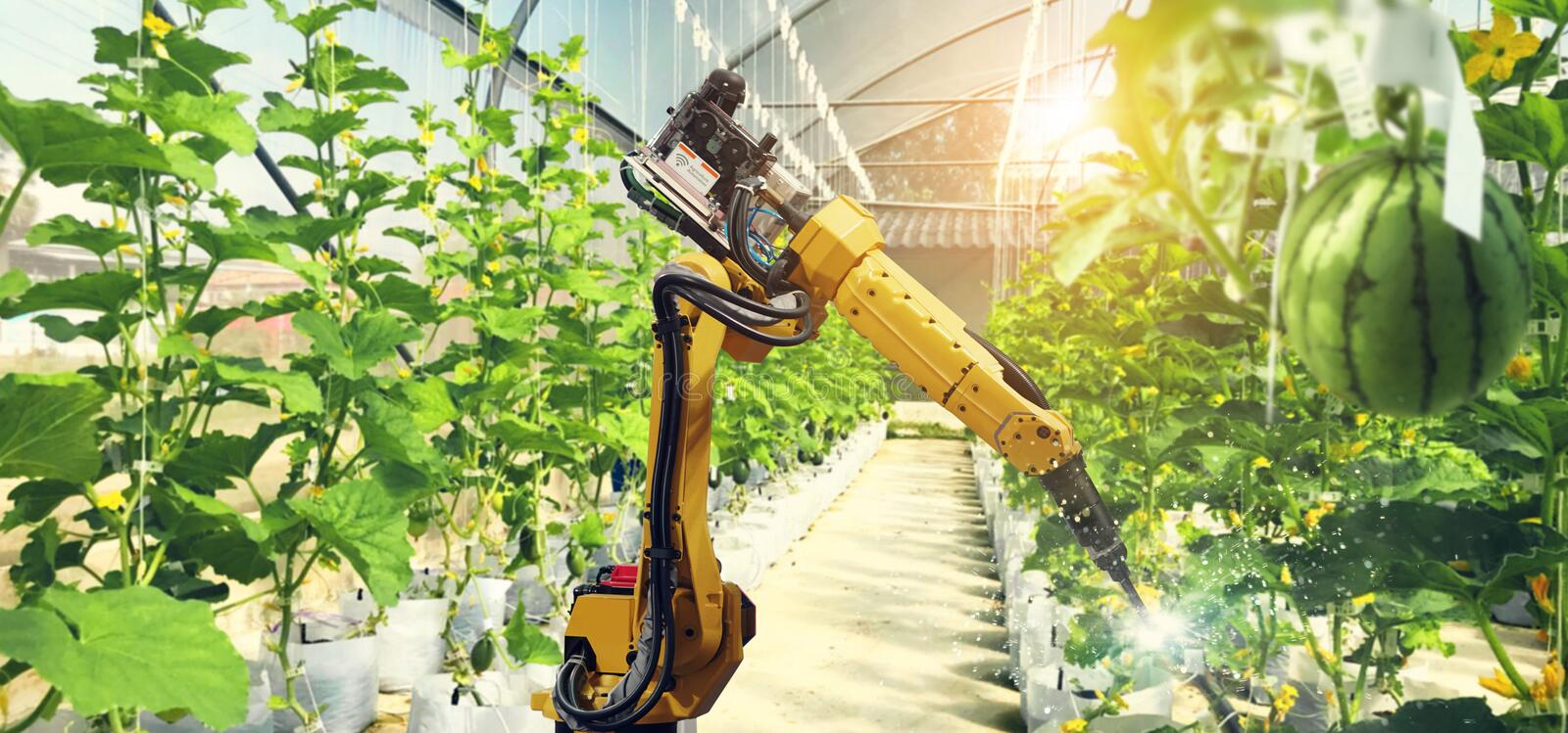 Artificial intelligence. Pollinate of fruits and vegetables stock photo