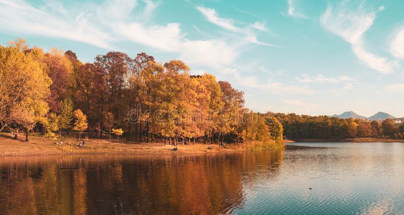 Artificial Lake and Grand Park in Tirana in autumn landscape stock photos