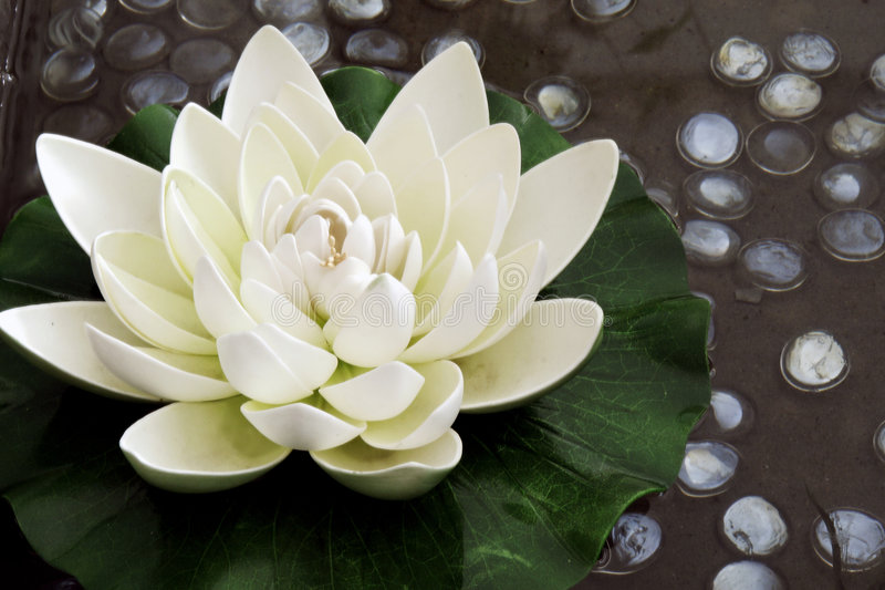 The artificial lotus flower. In the garden pond of hotels, its shape is very lifelike stock images