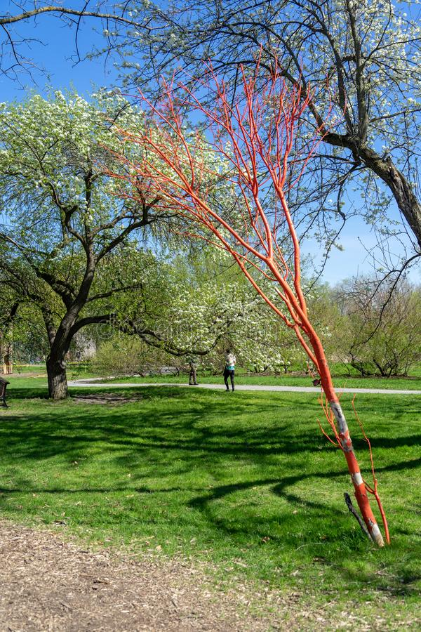 Artificial and nature tree at Montreal Botanical Garden royalty free stock photos