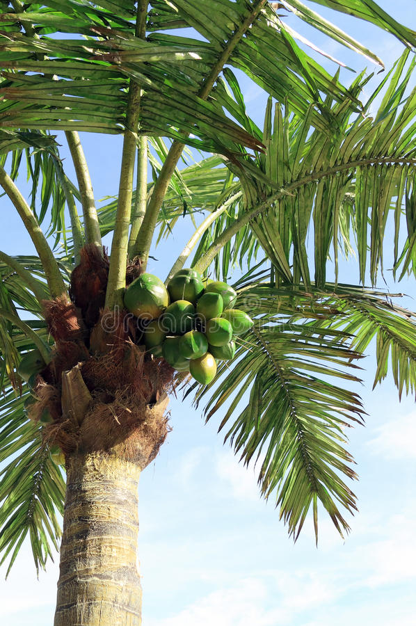 Download Artificial palm tree stock image. Image of coconuts, palm - 16981021