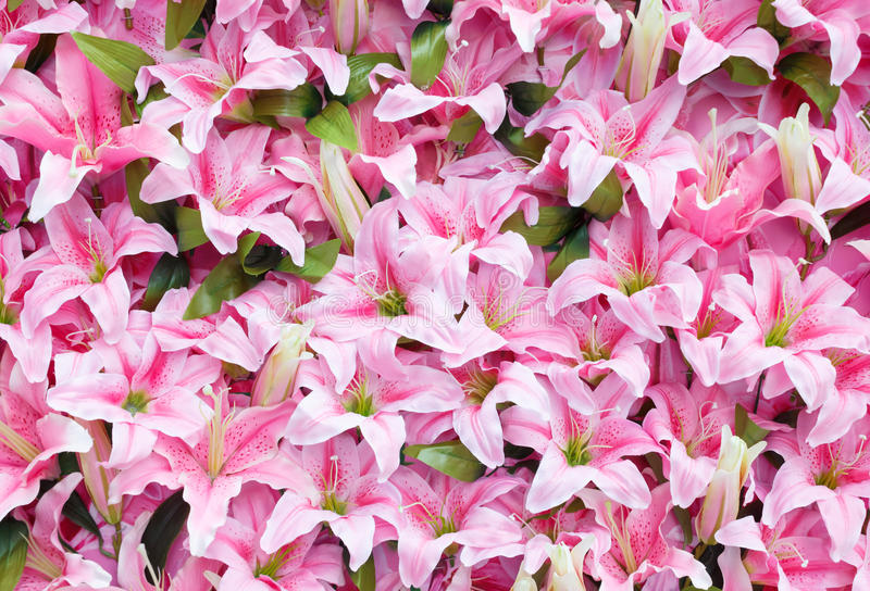 Artificial pink rain lily flowers background royalty free stock images
