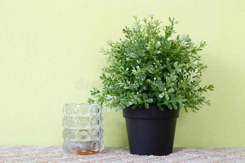download artificial potted plants on green wall with grass bottles stock image image