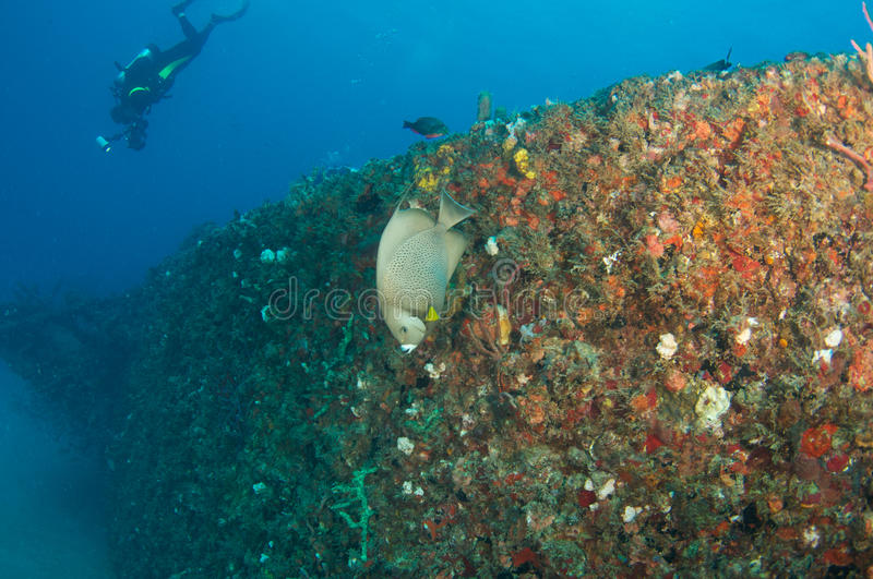 Artificial Reef-Ancient Mariner Stock Photography