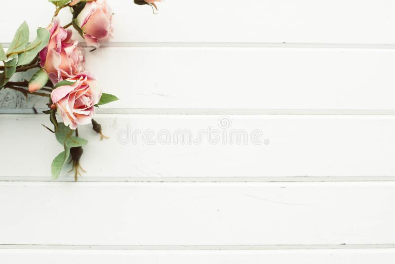 Roses on the background of white boards royalty free stock image