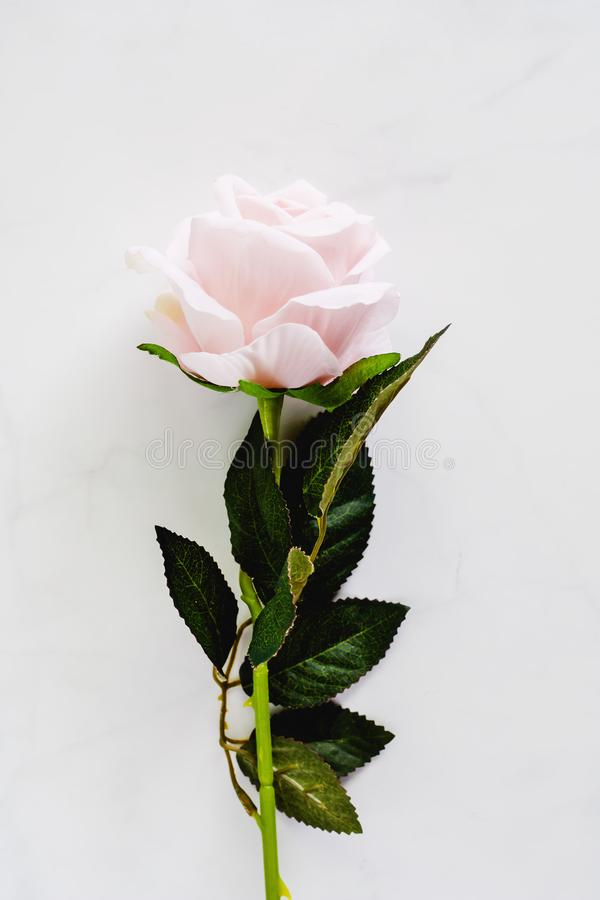 Artificial sweet pink rose for decoration on white marble background. (Vertical image) royalty free stock images