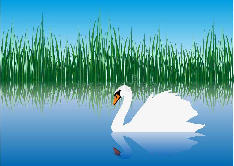 artig swan royaltyfri illustrationer