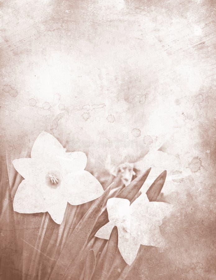 Artigos de papelaria sujos do daffodil ilustração royalty free