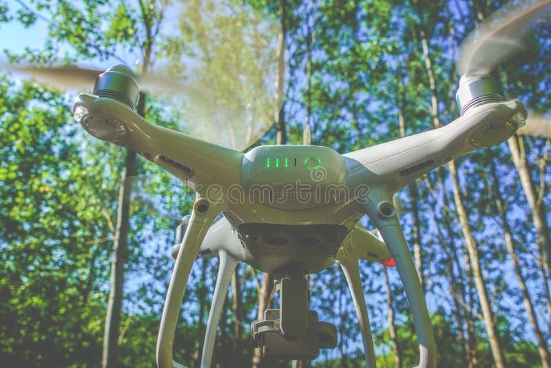 Artilugio del abejón en bosque foto de archivo libre de regalías