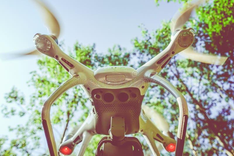 Artilugio del abejón en el vuelo del bosque fotografía de archivo