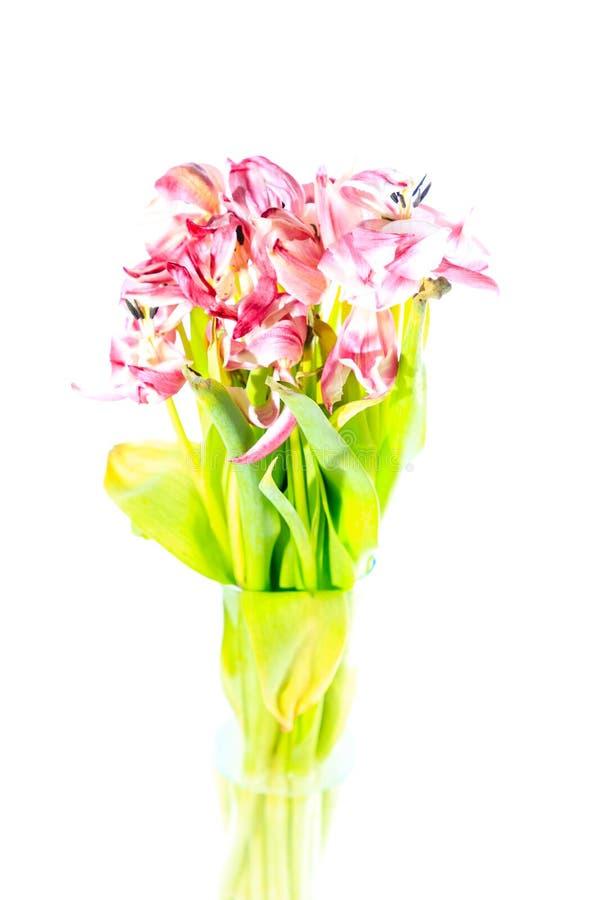 Artisitic, flor marchitada del tulipán imagen de archivo libre de regalías