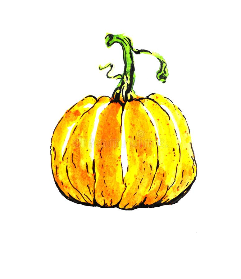 The artist paints a watercolor picture of an orange pumpkin on white paper for the holiday of Halloween royalty free illustration