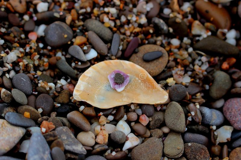 The eye from shells and pebbles stock image