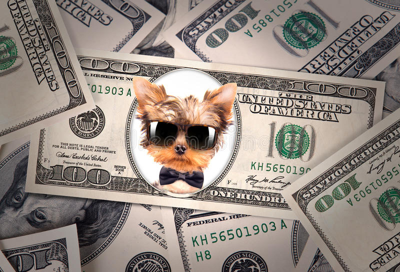 Artistic dollar bill with dog president royalty free stock photo