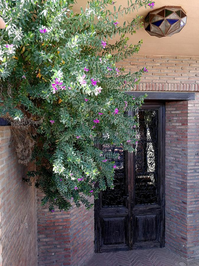 Artistic door with grille and glass. Bougainville and lamp stock photos