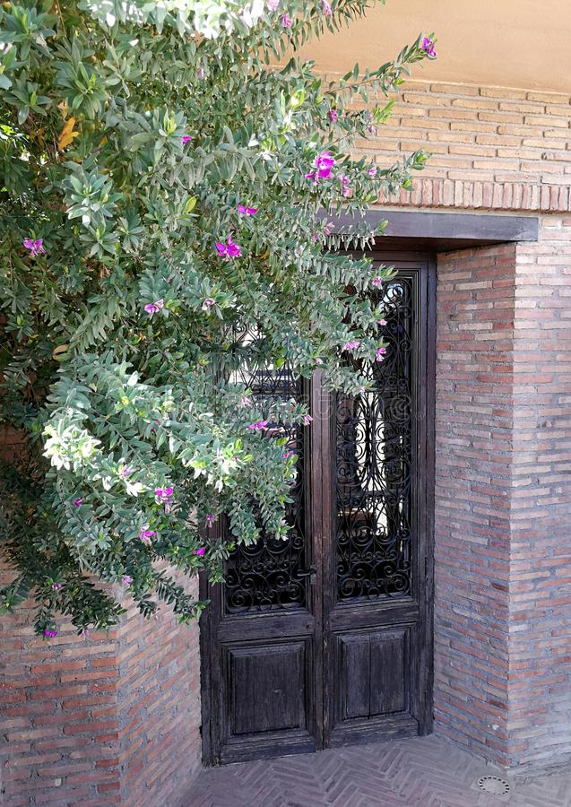 Artistic door with grille and glass. Bougainville and old bricks royalty free stock image