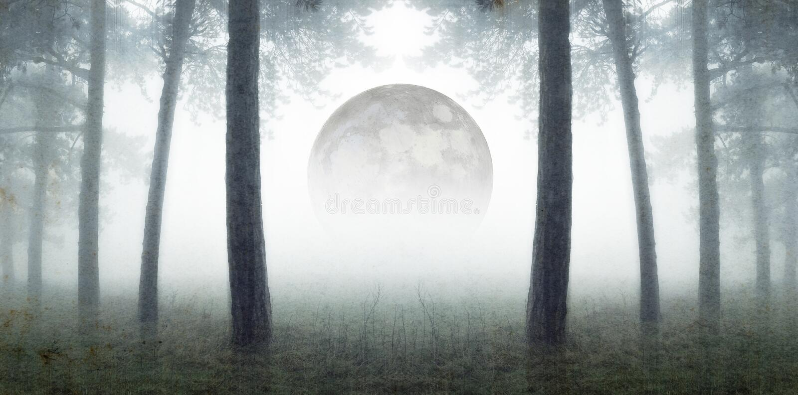 An artistic double exposure. Looking out across a misty field, framed by winter trees. With the moon rising in the background. Wit royalty free stock photo