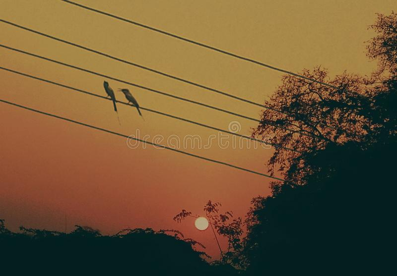 An artistic image of cute little birds during sunrise. A two small cute little birds are enjoying mild hot weather during Indian sunrise stock photos