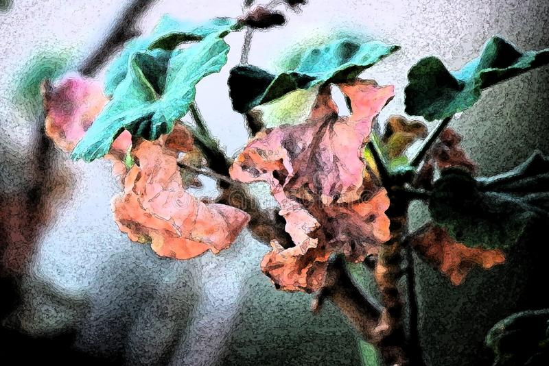 ARTISTIC IMAGE OF DEAD SHRIVELLED GERANIUM LEAVES stock photo