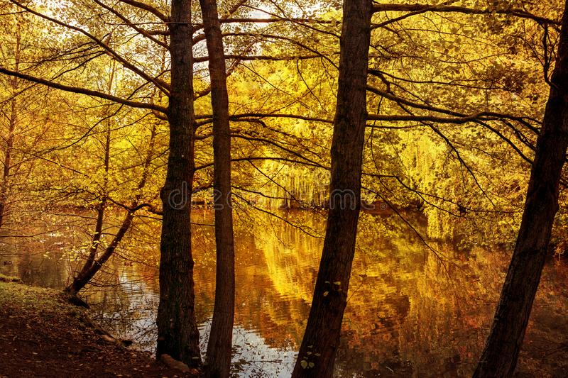 Autumn leaves mirrored in forest pond stock photo